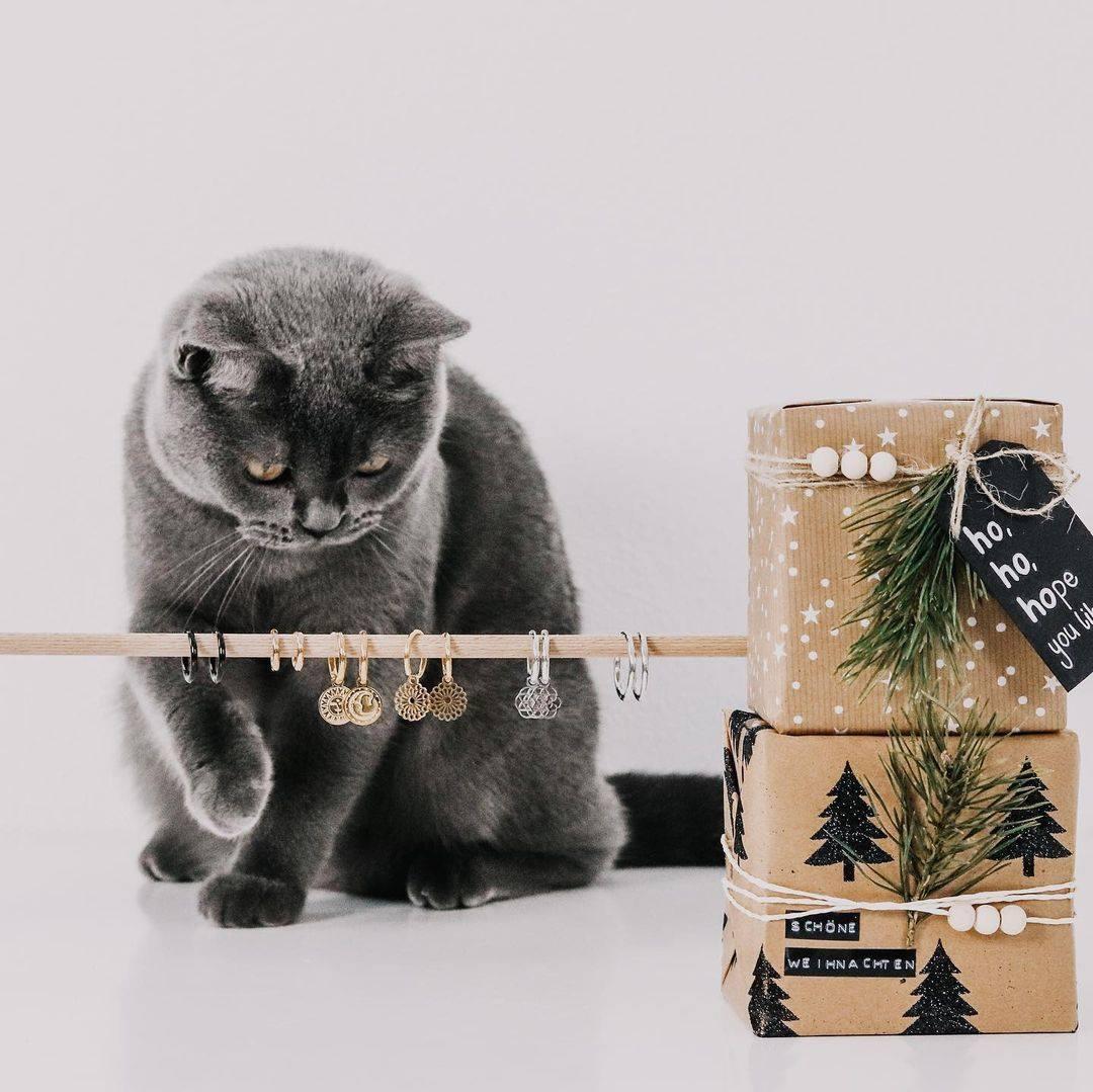 Zeigt-mal-her-eure-KatzenKater