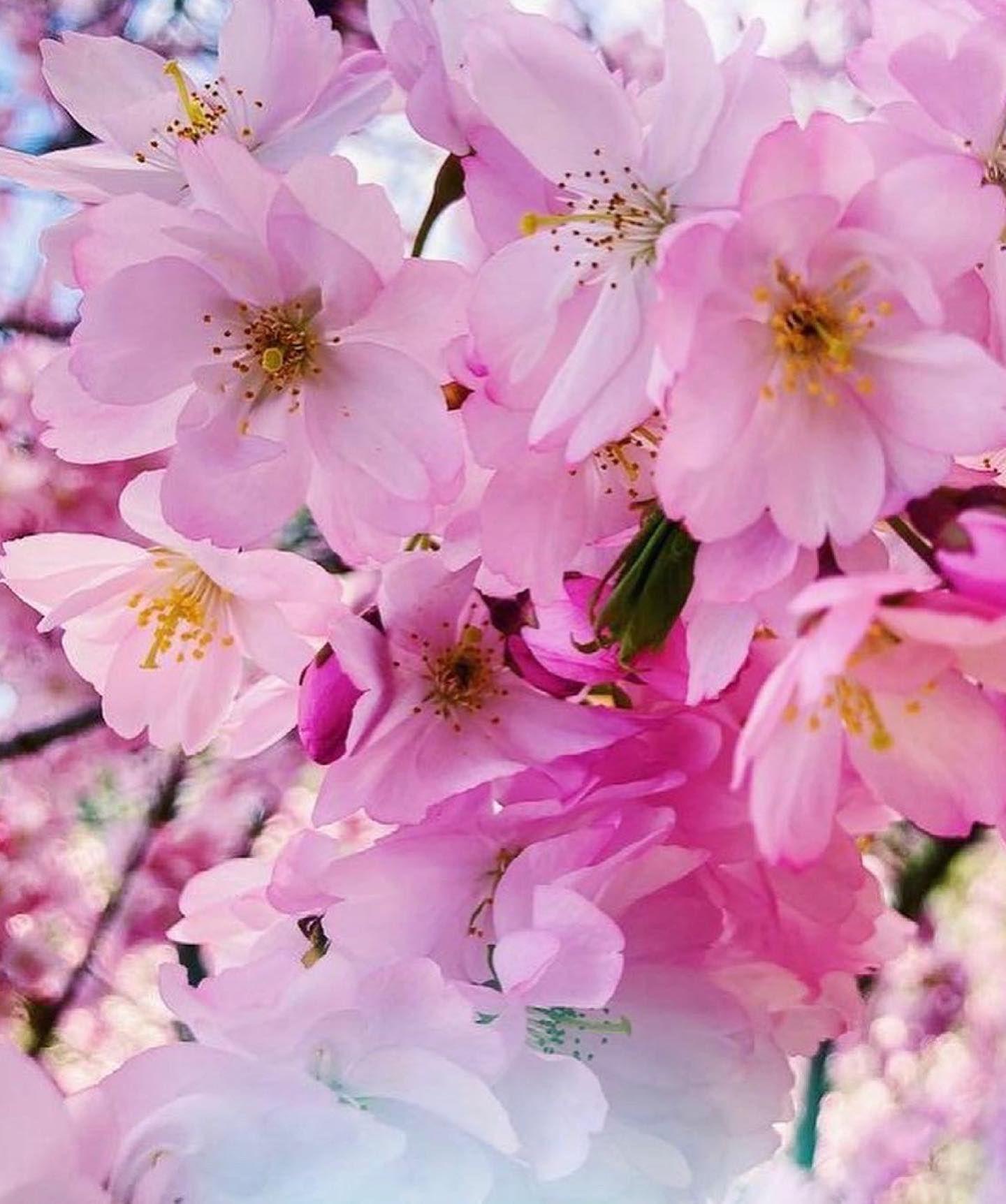 1624638378_721_Flower-Power